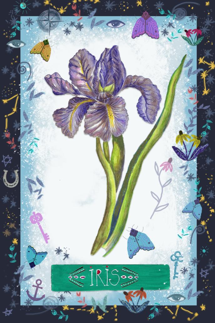Iris, by Susanne Mason