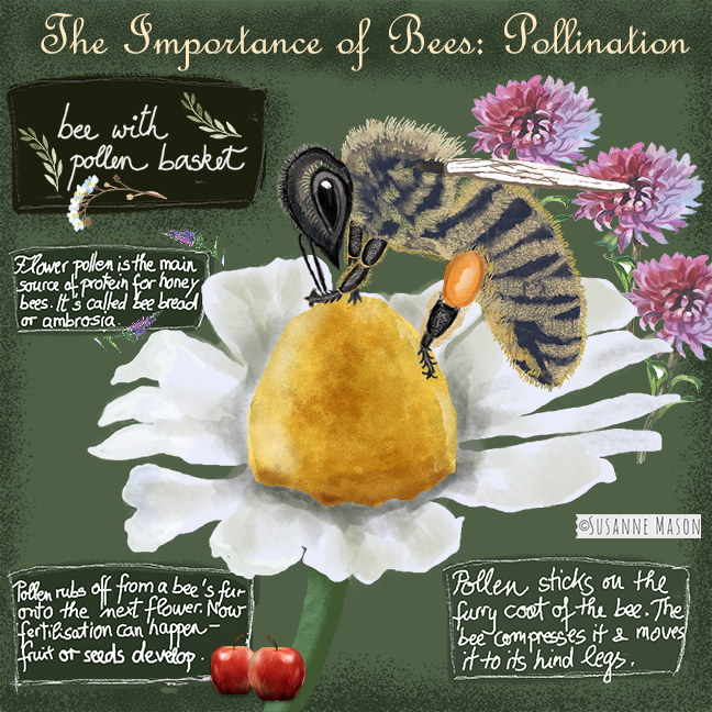 Bee pollination, by Susanne Mason