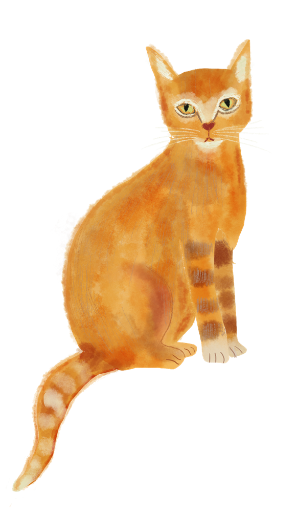 cat, editorial illustration by Susanne Mason